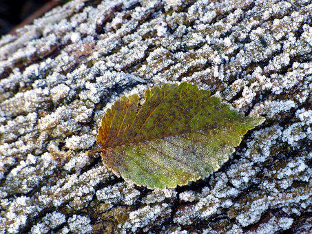 Leaf, Frost, Trunk, Cold, Nature, Autumn, Colorful