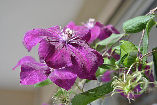 Color, Close Up, Farbenpracht, Violet