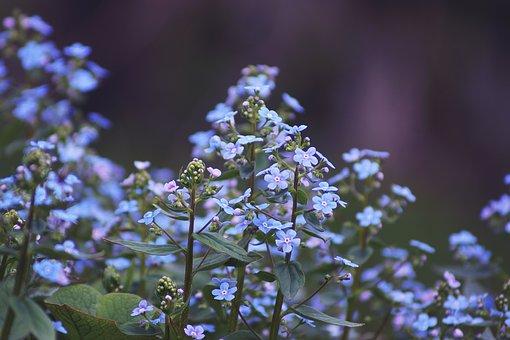 Flower, Spring, Floral, Vegetable, Soil, Heat, Sun, Sky