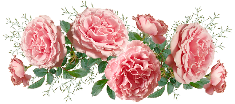 Flowers, Pink, Frilly, Roses