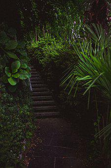 Green, Jungle, Nature, Bamboo, Tropical, Forest