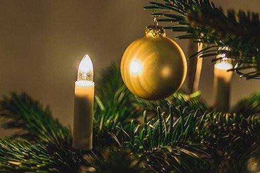 Christmas Tree, Christmas, Decoration, Tree, Holidays