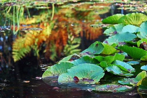 Arboretum, Autumn, Lake, Aquatic Plants, Water Lilies
