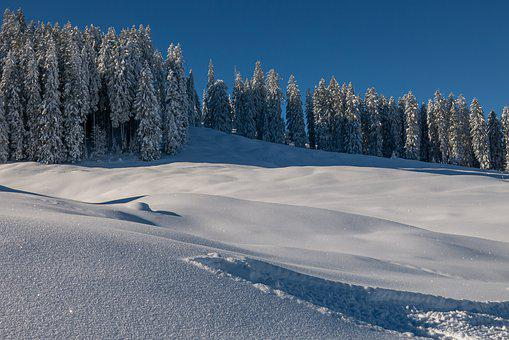 Winter, Landscape, Snow, Nature, Cold, Wintry, Frost