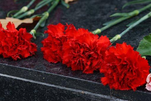 Red Carnation, Flowers, Petals, Closeup, Summer, Flower