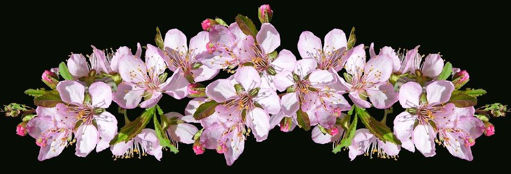 Flowers, Pink, Blossom, Arrangement