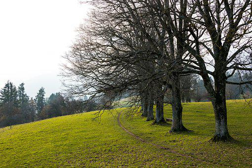 Trees, Avenue, Series, Away, Hill, Green, Meadow