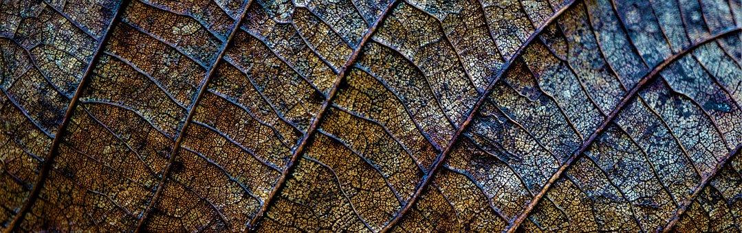 Background, Autumn, Leaf, Dead, Death, Surface, Gloomy