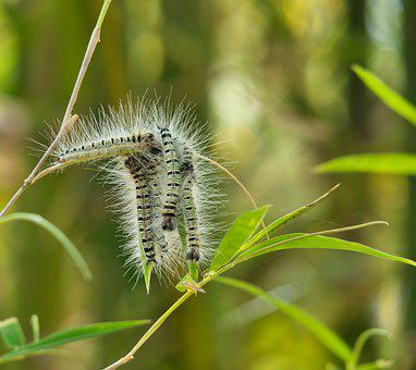 Track, Blade Of Grass, Hair, Insect