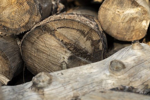 Wood, Timber, Cutting, Forestry, Texture, Trees, Body