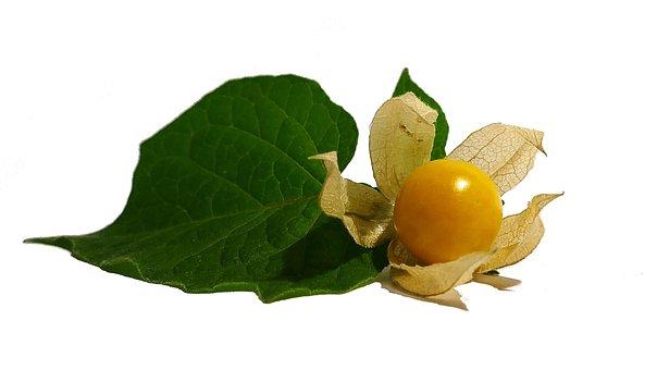 Physalis, Cape Gooseberry, Fruit, Orange, Healthy