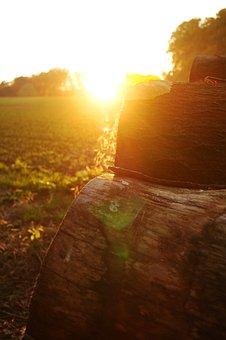 Autumn, Sunset, Forest Path, Nature, Landscape