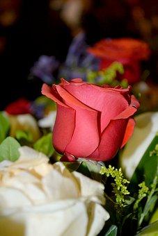 Rosa, Fix, Floral, Trim, Flower Arrangement, Pink