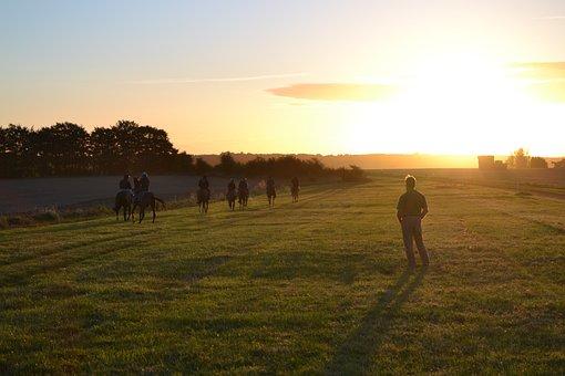 Racehorses, Horses, Training, Morning, Lambourn