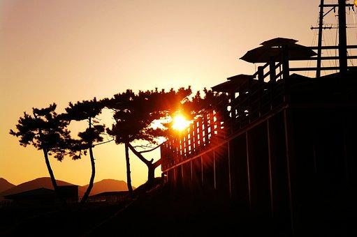 Night View, Solar, Sunshine, Wood, Glow, Life, Sky