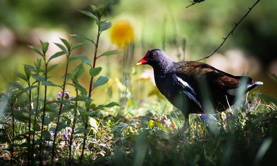 Bird, Wild World, Nature, Wingtip Toys, Animal