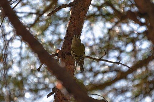 Animal, Forest, Sunbeams, Green, Wood, Bird, Wild Birds