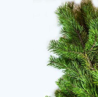 Branch, Pine, Christmas, Nature, Tree, Evergreen