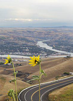 Yellow Flowers, Lewiston Idaho, Clarkston Washington