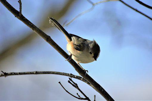 Bird, Colorful, Small, On Branch, Songbird, Nature