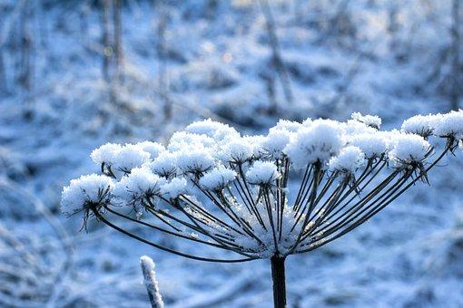 Winter, Snow, December, Christmas, Nature, First Snow