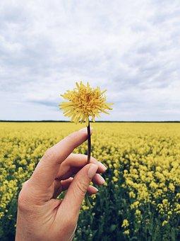 Ukraine, Field, Dandelion, Hands, Flowers, Sky, Dreams