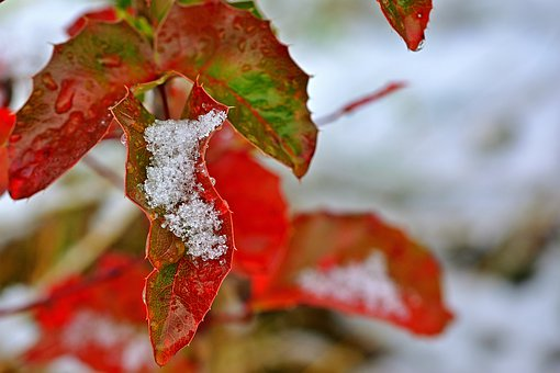 Leaf, Coloring, Fall Foliage, Nature, Close Up, Snow