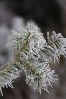 Icy, Hoarfrost, Winter, Frost, Frozen, Plant, Frosty