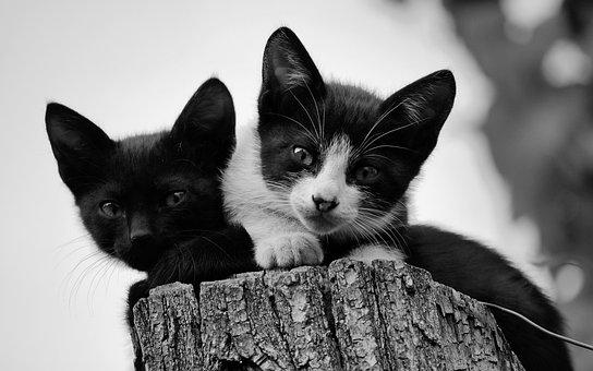 Kitten, Cats, Chicken, Small, Together, Animals, Feline