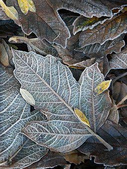 Frost, Autumn, Cold, Nature, Leaves, Frozen, Morning