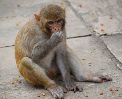 Monkey, Eating, Animal, Nature, Mammal, Wildlife, Cute