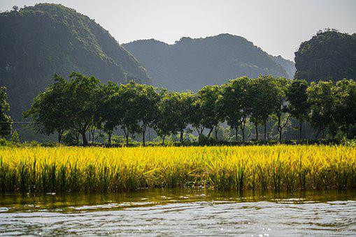 Rice Fields, Mountains, Trees, The River