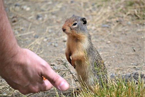 Marmot, Outside, Wild, Cute, Animal, Nature, Wildlife