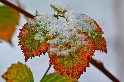 Leaf, Coloring, Snow, Nature, Red, Color, Color Change