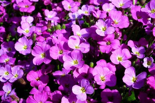 Little Flowers, Violet, Minor, Nature