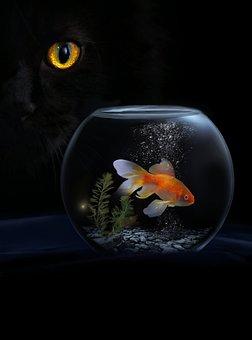 Animal, Cat, Goldfish, Fish, Pet, Portrait