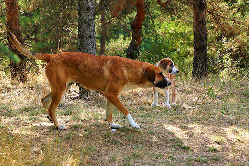 Dog, Animal, Nature, Mom, Puppies, Forest, Portrait