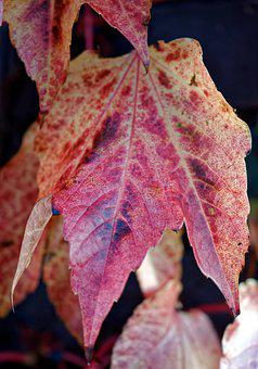 Leaf, Leaves, Rust, Almost, Colors, Autumn, Ribs