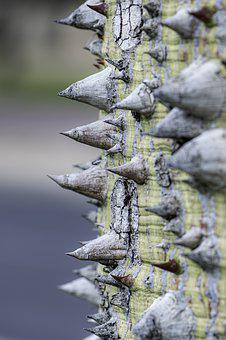 Bark, Tree, Spines, Sharp, Wood, Needle
