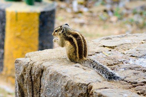 Squirrel, Animal, Animal Photography