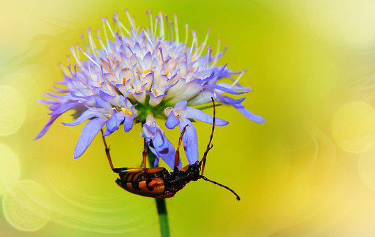 Strangalia Spotted, The Beetle, Insect, Antennae, Model