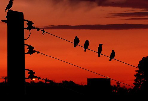 Sunset, Poles, Electric, Cables, Birds