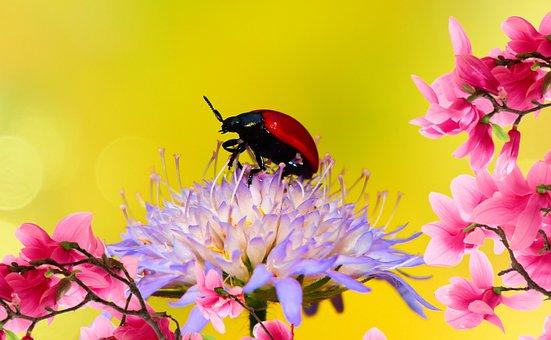 Topolowa Rynnica, The Beetle, Stonkowate, Flower, Posts