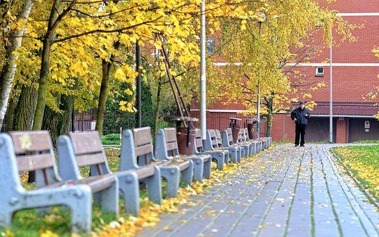 Landscape, Park, Nature, Autumn, Trees, Leaves, Colored