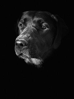 View, Dog, Animal, Portrait, Puppy, Head