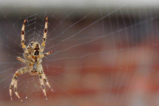 Spider, Web, Macro, Close, Arachnophobia, Weave, Scary