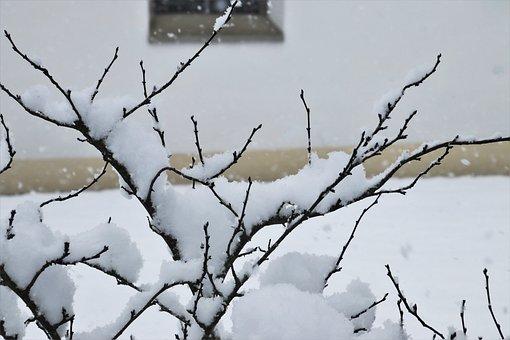 Cold, Bush, Icy, Winter, Snowfall, White, Twigs, Frozen