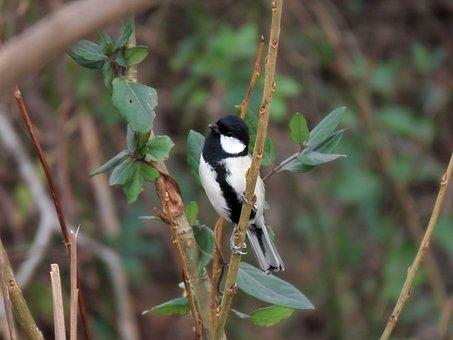 Animal, Forest, Green, Wood, Bird, Wild Birds, Tits
