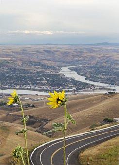 Yellow Flowers, Lewiston Idaho, Clarkston Washington