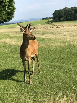 Deer, Nature, Animal, Feast
